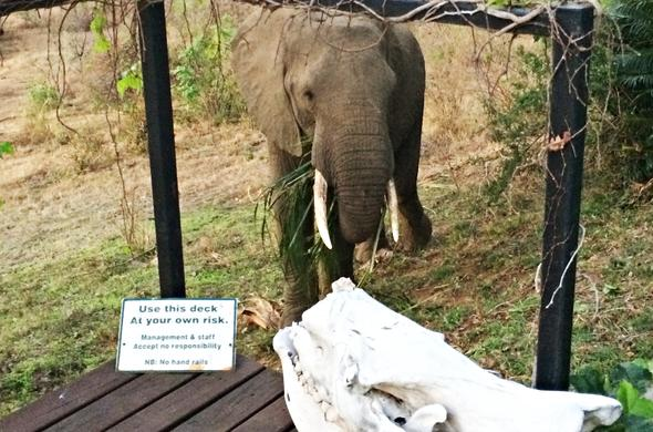 Enjoy elephant sightings on the deck.
