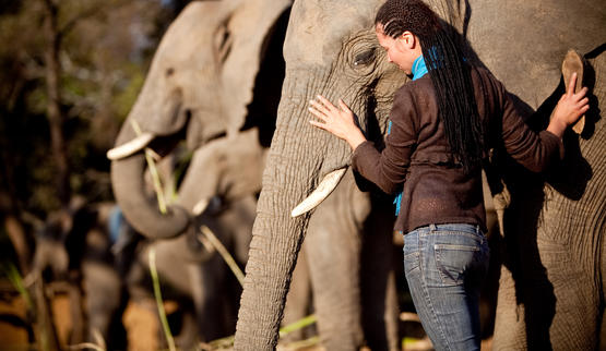 Interact with Elephants at Elephant Whispers.