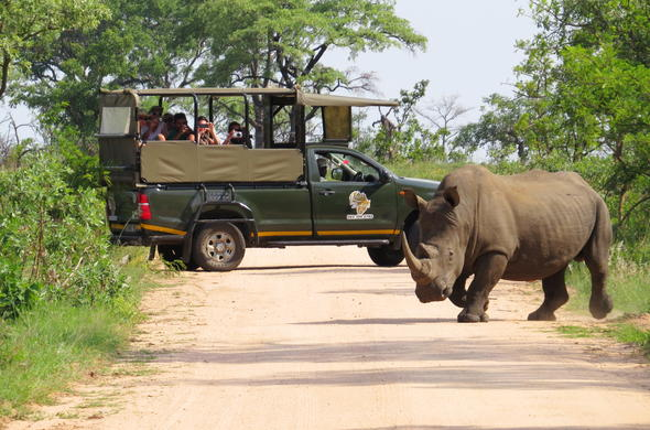 Private guided safari game drive in Kruger National Park.