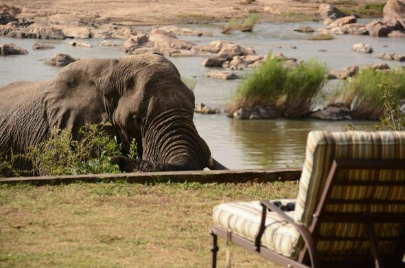 View elephant from the pool deck at Mjejane River Lodge accommodation near Kruger Park.
