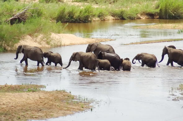 Enjoy wonderful elephant sightings.
