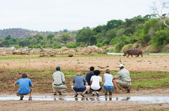 Embark on guided walking safaris.