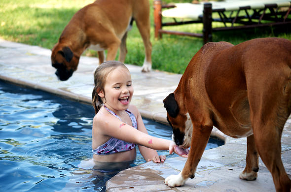 Child having fun in the swimming pool and playing with resident dogs.